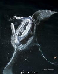 From the abyss by Stepan Reshetnikov