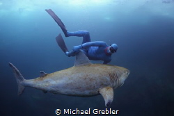 A free diver encounters the docile Canadian freshwater sh... by Michael Grebler