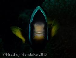 Looking down the barrel. Nikon d7100 by Bradley Kerslake