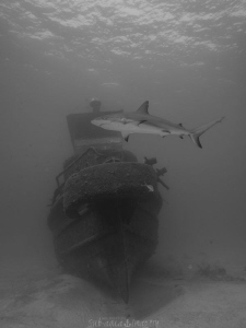Big Crab Wreck with a Visitor by Jan Morton
