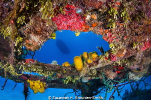 """""""Colorful Frame"""" The wreck of the Doc Polson provides a ... by Susannah H. Snowden-Smith"""