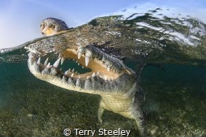 'Happy snapping!'. American crocodile, Banco Chinchorro, ... by Terry Steeley