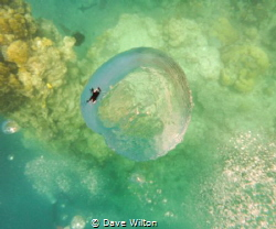 I has dived when snorkeling over divers below and I snapp... by Dave Wilton