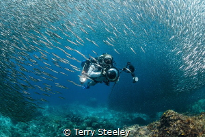 Diver swims through thousands of bait fish at Two Tree Is... by Terry Steeley