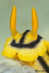 Yellow friend by Raoul Caprez