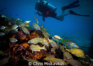 Diver and school.... by Chris Miskavitch