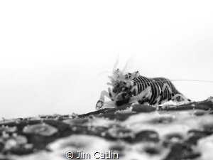 'Sea Badger' by Jim Catlin