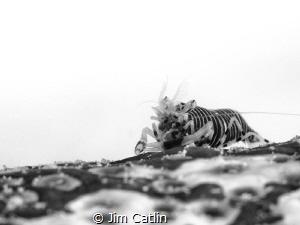 'Sea Badger' by Jim Catlin