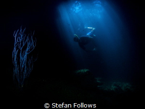 """""""I refuse to answer that question on the grounds that I d... by Stefan Follows"""
