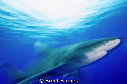 Blurred photo of a Oceanic White Tip in Cat Island, Bahamas by Brent Barnes