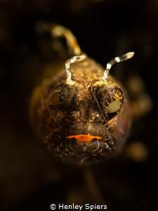 'Underwater Gargoyle' by Henley Spiers