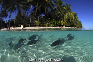 Halimatha , Maldives Nikon D200, 10,5mm, no strobo by Marchione Giacomo