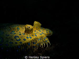 Peacock Flounder Sunbathing Olympus EM5, Olympus 60mm ma... by Henley Spiers