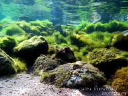 Algae bloom by Laura Dinraths