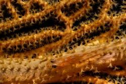 Sea fan and goby - Mayotte No crop by Takma Lherminier