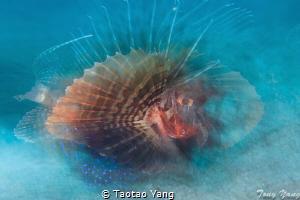 fish dream by Taotao Yang