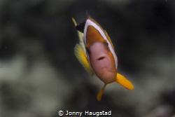 """""""Nemo"""" portrait. by Jonny Haugstad"""