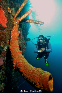 Fransicsa and the big yellow tube sponge on the 1600m ver... by Arun Madisetti
