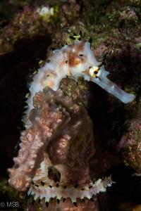 Seems like a kind of affinity. Thorny sea horse is huggin... by Mehmet Salih Bilal