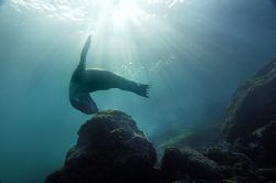 nik. D2x - sealion on galapagos, this was the best checkd... by Manfred Bail