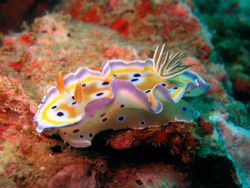 Nudibranch taken at Koh Bida Nai , Andaman Sea , Thailand . by Oliver Mischo