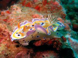 Nudibranch taken at Koh Bida Nai , Andaman Sea , Thailand . by Oliver Mischo