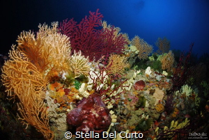 """An ocean of colours"" - Coloured gorgonians located at ab... by Stella Del Curto"