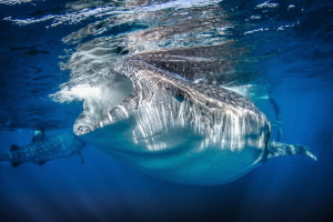Shark infested water, clear and blue by Steven Miller