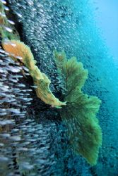 Love the coral life in Thailand. by Glenn Poulain