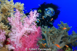 Soft coral by Robert Malolepszy