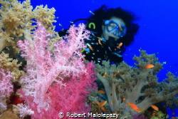 Soft coral by Robert Malolepszy