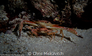 Crustacean couple looking to be left alone.... by Chris Miskavitch