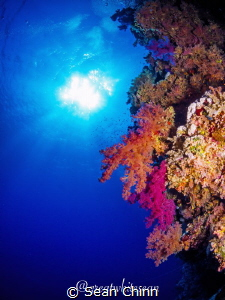 The beautiful colours of a Red Sea wall scene by Sean Chinn