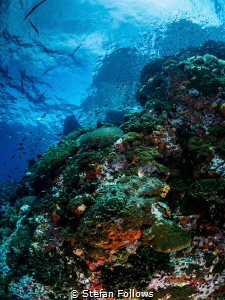 No water, no life. No blue, no green - Sylvia Earle. Sail... by Stefan Follows