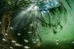 "freshwater ""mangrove"" (Hérault, France) by Mathieu Foulquié"
