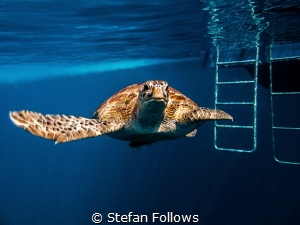 Anytime you see a turtle up on top of a fence post, you k... by Stefan Follows