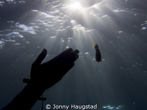 Light, hand and a Clownfish. by Jonny Haugstad
