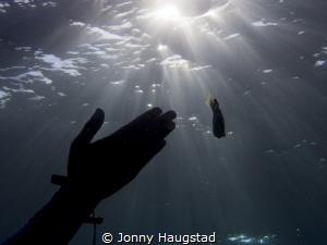 Light, hand and a Clownfish. by Jonny Haugstad