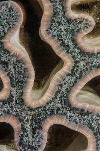 Reef architecture. by Mehmet Salih Bilal