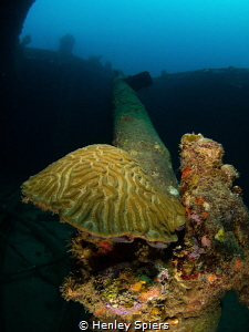 Brain coral growing on the broken mast of the Lesleen M w... by Henley Spiers