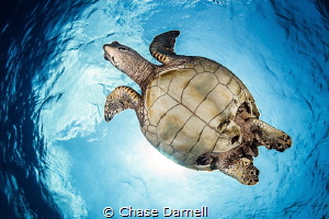 """""""Up and Over"""" Gaining the trust of the Turtle is mandato... by Chase Darnell"""