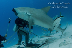 Shark going Up, Playa del Carmen Mexico by Alejandro Topete