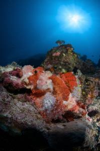Scorpionfish under the sunburst by Dmitry Starostenkov