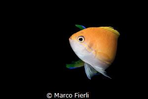 Folding 3359x2239 by Marco Fierli