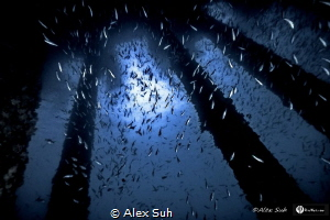 Raining Fish by Alex Suh