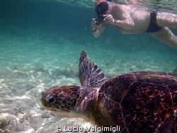 Swimming with a turtle by Lucio Valgimigli
