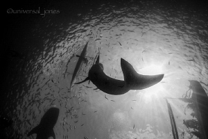 """A Whale Sharks Tail"" by Wayne Jones"