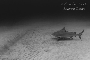 Shark in the Sand, Playa del Carmen mexico by Alejandro Topete