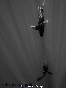 Free diving with an Oceanic White tip by Emma Camp