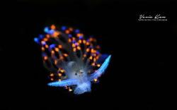 Glow in the dark by Vania Kam